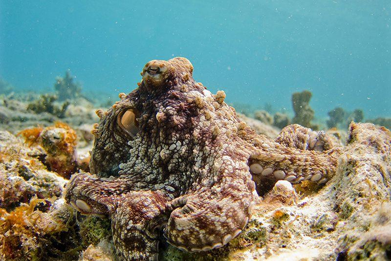 octopus sleep