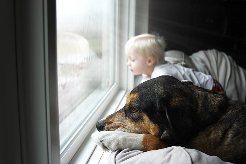 A large pet dog and a little baby boy are dreamily looking out their home window on a rainy day.